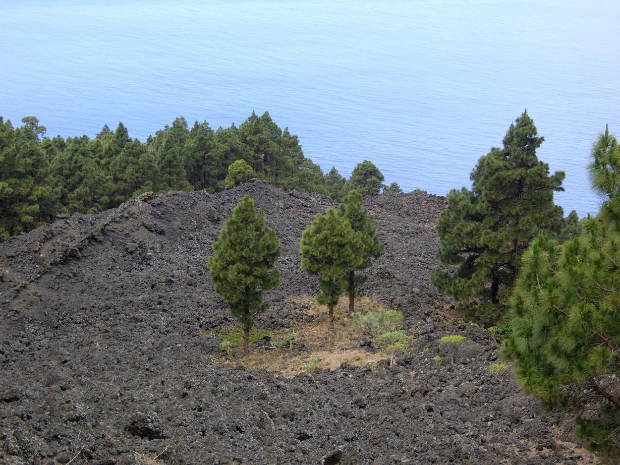 Coladas del volcán de El Charco, en su caída por la pendiente