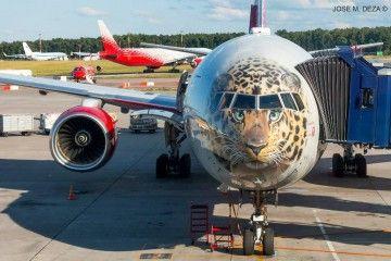 La imagen del tigre de Amur, pintada en el morro del B-777 de Rossiya