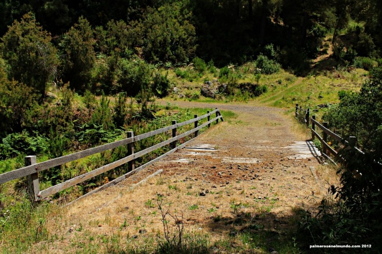 El tablero del puente muestra las señales del abandono