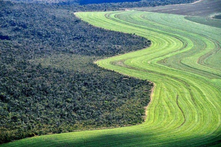 Agricultura junto a un cerrado (sabana) nativo en Formosa do Rio Preto, oeste del estado de Bahía